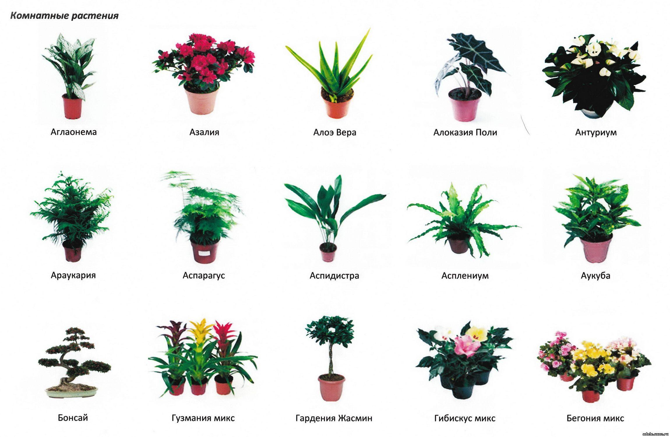 Комнатные цветы в детском саду названия и фото